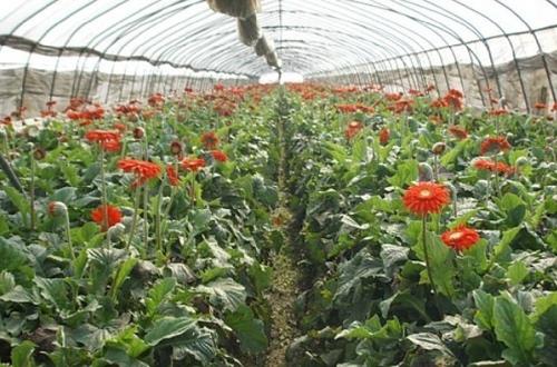chinaflower's blog flowers and flowers market in kunming, Beautiful flower
