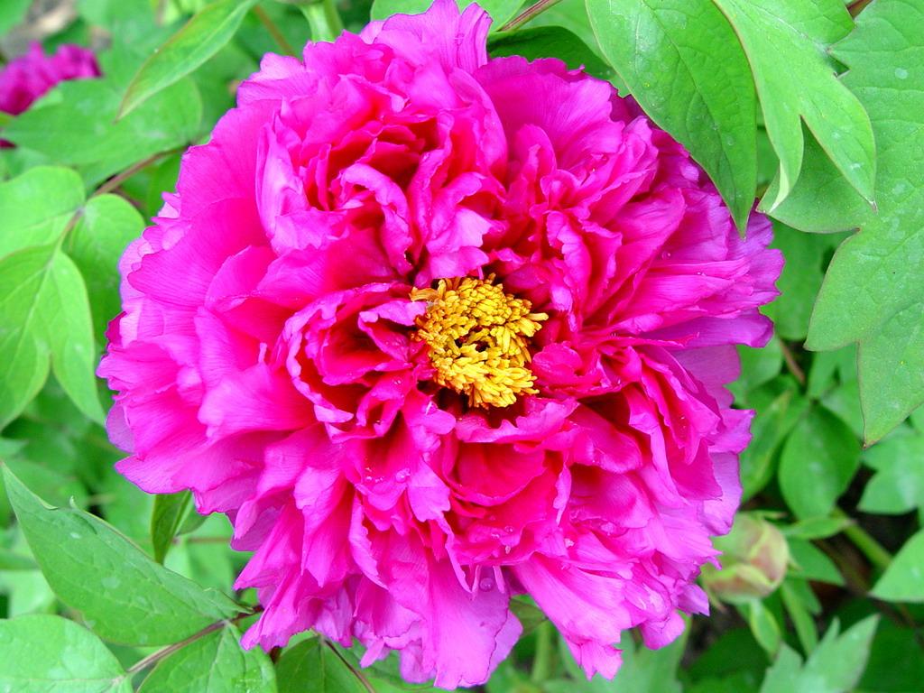Chinaflower214 s Blog Chinese Flowers